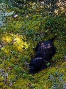 Peppi metsässä