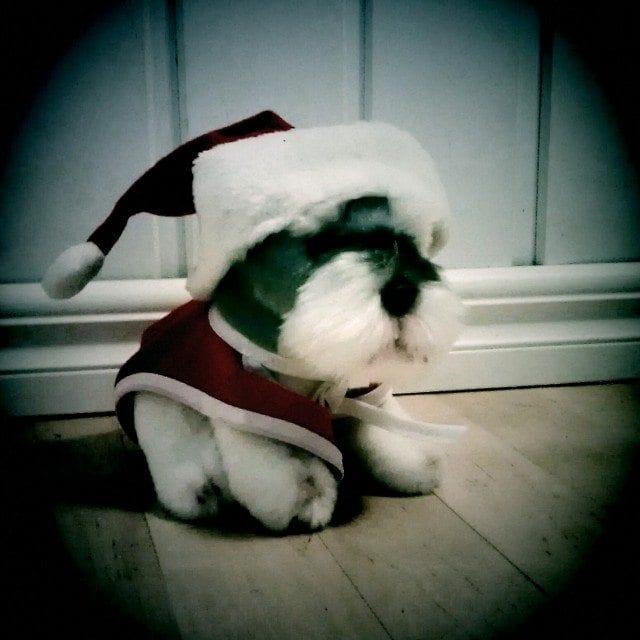 Karvaista joulua